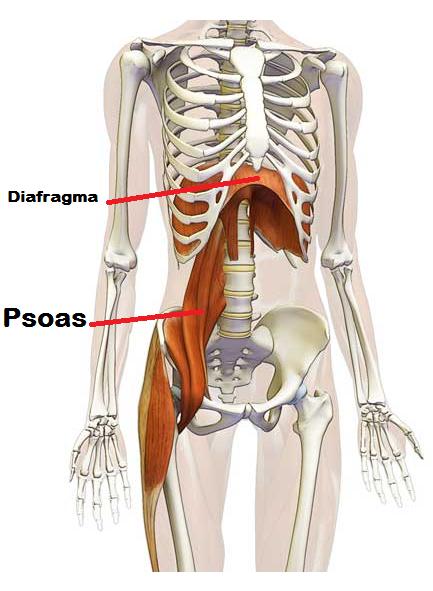 psoas
